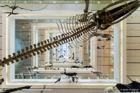 Hörmann Italia rinnova partnership con il MUSE, museo di Trento