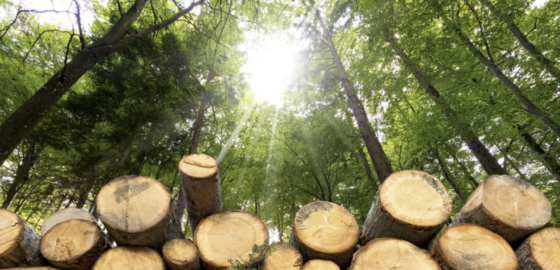 Ricorrere alle foreste italiane per arginare arginare aumento costi legno